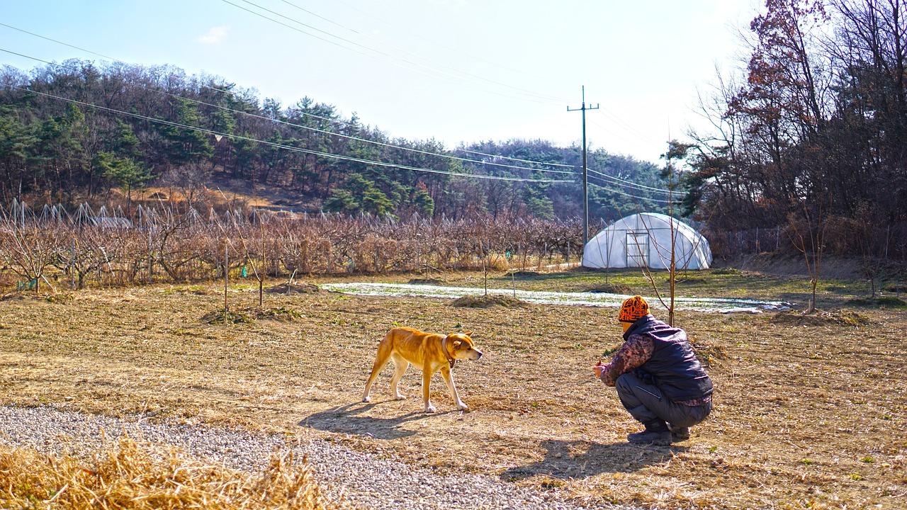 собака корея